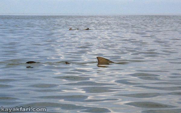 Flex Maslan kayakfari First National Bank Florida Bay kayak Everglades mud flats low tide turtle grass Key