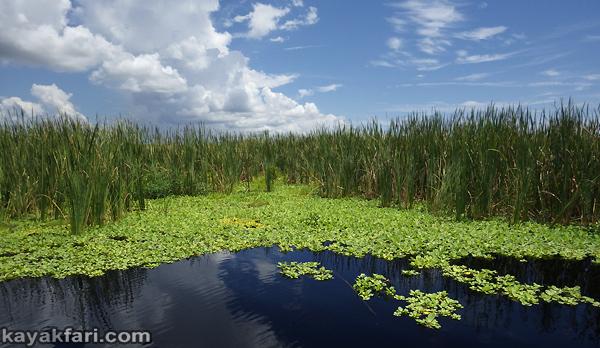 flex maslan kayakfari lake okeechobee kayak fisheating everglades paddle green algae pollution