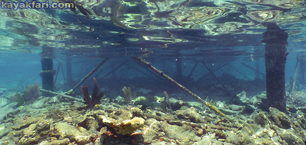 flex maslan Kayakfari carysfort reef lighthouse kayak paddle key largo pennekamp dive coral history photography surfski park iron pile