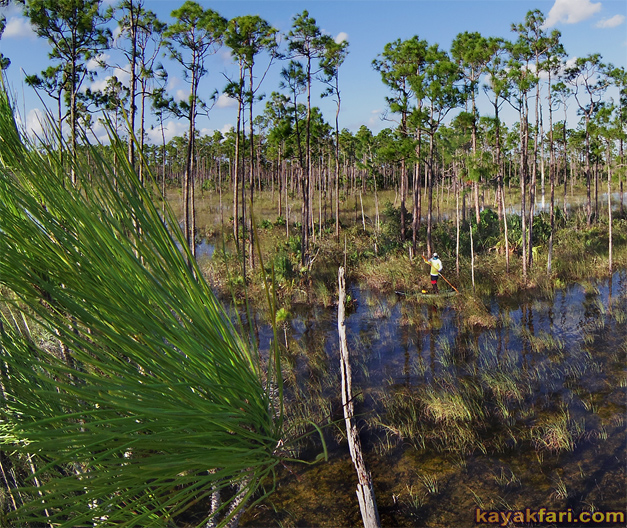 Flex Maslan kayakfari everglades high water paddle kayak photography Ingraham prairie dwarf cypress pineland forest
