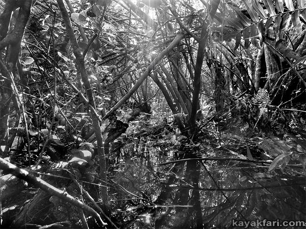 Flex Maslan kayakfari photographer Chekika island kayak canoe everglades tree hammock sawgrass Harney 1840 Indian Key